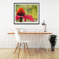 Flower in field by Maxine Walter