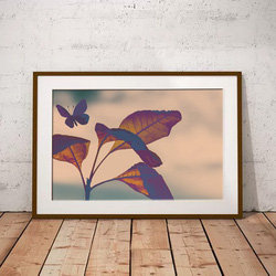 Butterfly Silhouette by Maxine Walter
