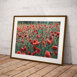 Poppies by Maxine Walter