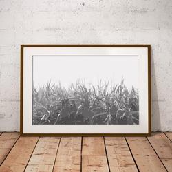 Monotone Grass by Maxine Walter