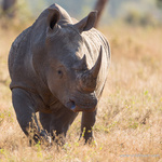 Rhino portfolio