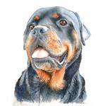 Pets portfolio