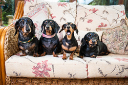 Ollie, Monty, Trudy, Luigi, Digby and Eva! portfolio