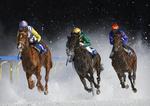 Ice horses portfolio