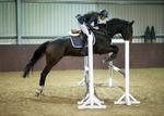 LINK_TO - EquestrianEvents November'13 portfolio