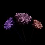 Funky Flowers ... portfolio