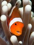 Fishlife portfolio
