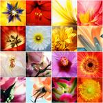 Gartenblumen | Garden Flowers portfolio