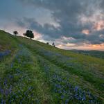 The Mendip Hills
