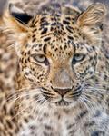 Wildlife and Animals portfolio
