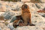 Galapagos portfolio