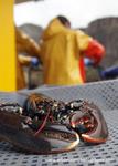 Creel (Trap) Fisheries portfolio