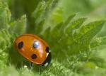Nature & Wildlife portfolio