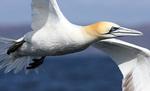 Seabirds portfolio