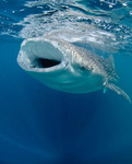 Whalesharks portfolio