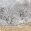 seasons portfolio