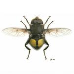 Flies portfolio