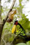 Amphibians. Insects & Invertebrates. portfolio