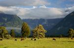 New Zealand South Island portfolio