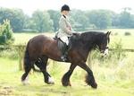 LINKS TO - Equestrian Events Aug'12 portfolio