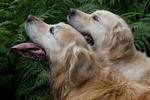 Canine Action portfolio