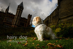 Teddy at Saltwell Park portfolio