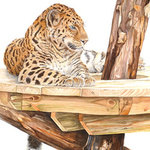 Big cats portfolio