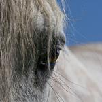 Horses portfolio