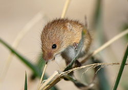 Other Wildlife Images portfolio