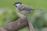 Local Birds portfolio