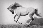 Spirit of Equus portfolio