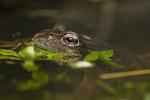 Amphibians & Reptiles portfolio