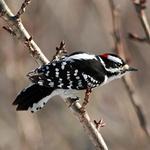 Woodpeckers portfolio