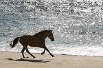 Sea Horses portfolio