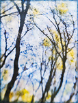 Among the Trees portfolio