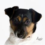 Pet Portfolio portfolio