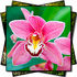 Plant Portraits portfolio