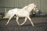 LINK TO - Country Farm Stud, 16th April '11. Crispin Stallion portfolio