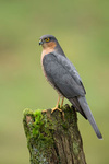 Sparrowhawk portfolio