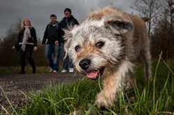 Harvey the Border Terrier at Rainton Meadows, Sunderland portfolio