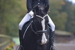 PetPlan Regional Finals at Bicton  Oct 21st/22nd