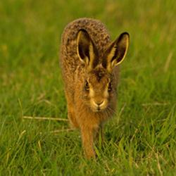 Hares portfolio