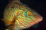 Marine Life portfolio