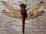 Invertebrates portfolio