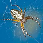 Bugs: Spiders portfolio