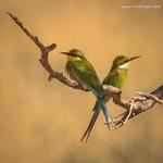 Small Birds portfolio