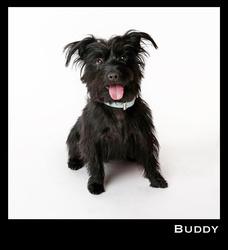 Buddy portfolio