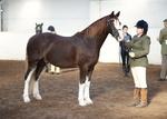 LINKS TO - Equestrian Events Oct'12 portfolio