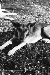 Feral Dogs portfolio