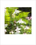 Open Edition Prints portfolio